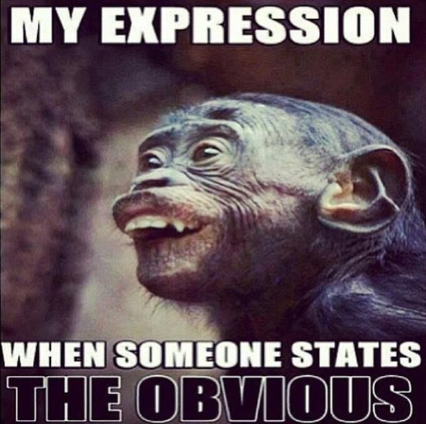 My expression when someone states the obvious Monkey Meme