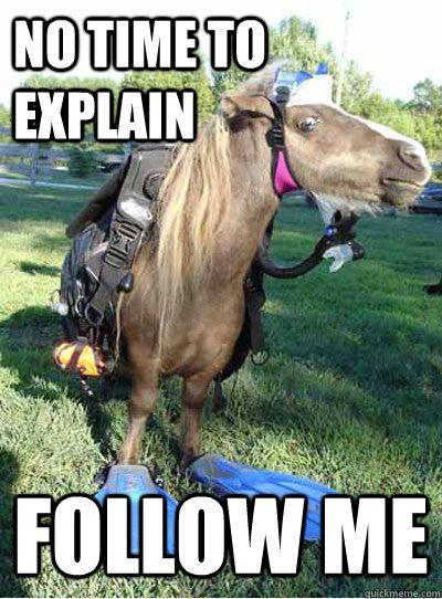 No time to explain follow me Horse Meme