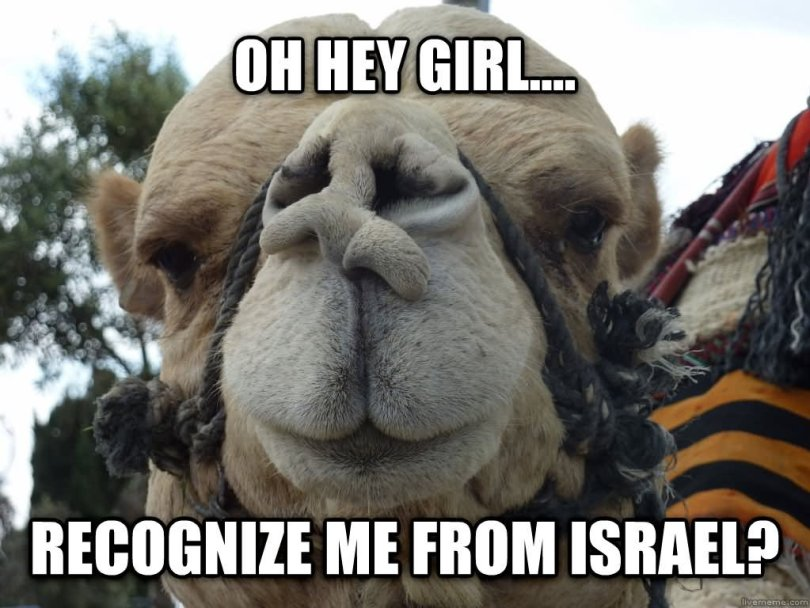 Oh hey girl recognize me fron israel Camel Meme