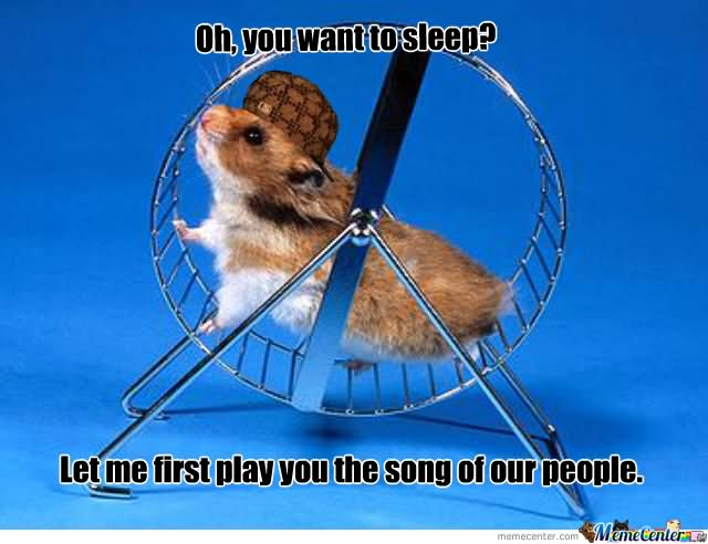 Oh you want to sleep let me first play you the song of our Hamster Memes