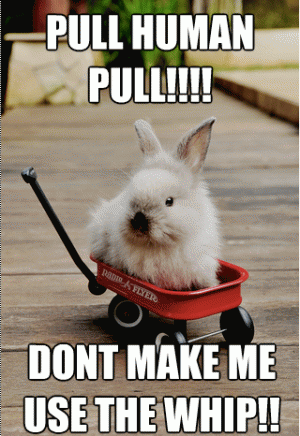 Pull human pull don't make me use the whip Bunnies Memes