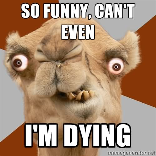 So funny can't even I'm dying Camel Meme
