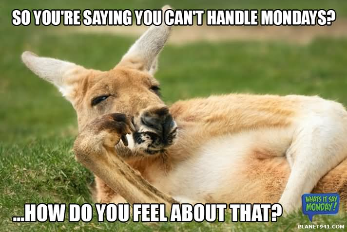 So you're saying you can't handle Kangaroo Memes
