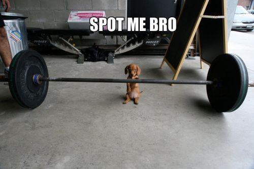 Spot me bro Exercise Meme