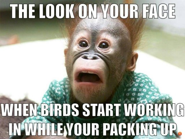 The look on your face when birds start Hunting Meme