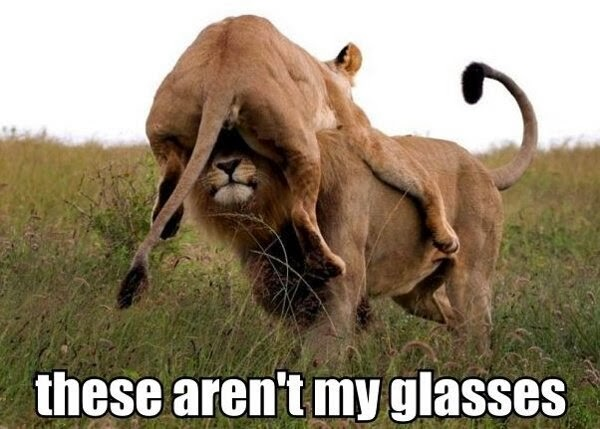 These arn't my glasses Lion Meme