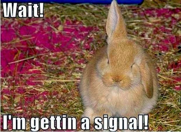 Wait i m gettin a signal Bunnies Memes