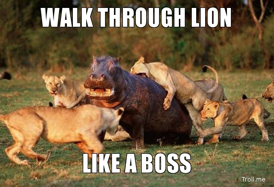 Walk through tion like a boss Lion Memes