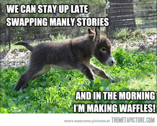 We can stay up late swapping manly stories Donkey Meme