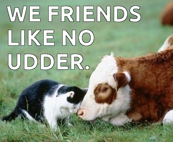 We friends like no udder Cow Meme