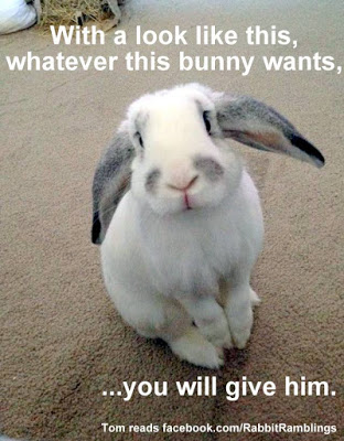 With a look like this whatever this bunny wants Bunnies Meme