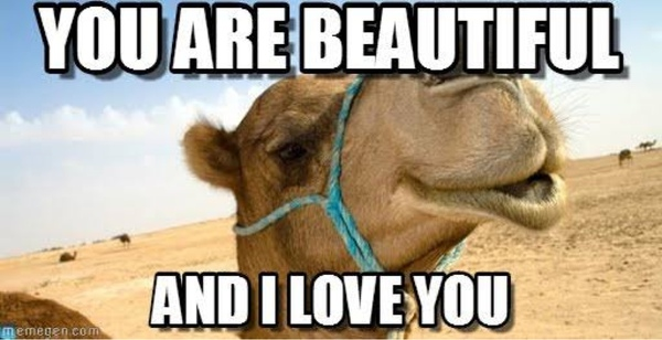 You are beautiful and i love you Camel Meme
