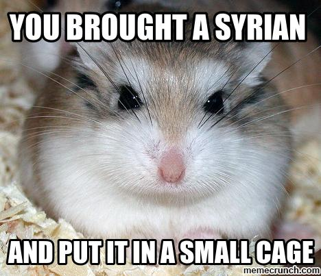 You brought a syrian and put it a small cage Hamster Memes