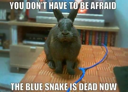 You don't have to be afraid the blue Bunnies Meme