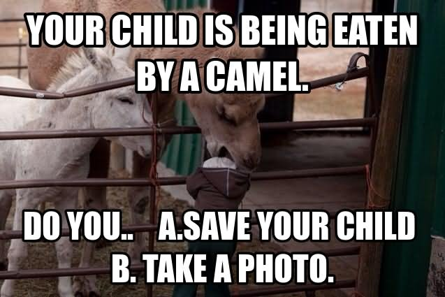 Your child is being eaten by a camel do you a save your child take a photo Camel Meme
