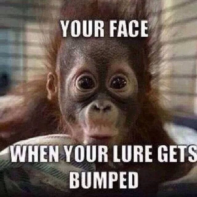 Your face when your lure gets bumped Monkey Meme