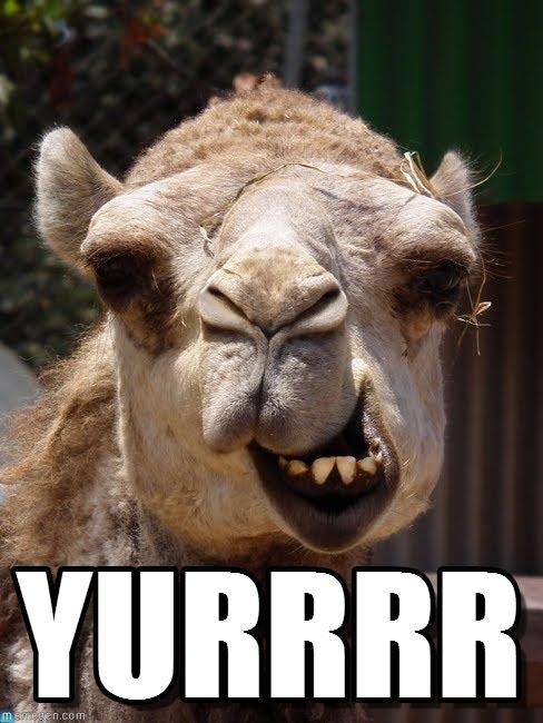 Yurrrr Camel Meme