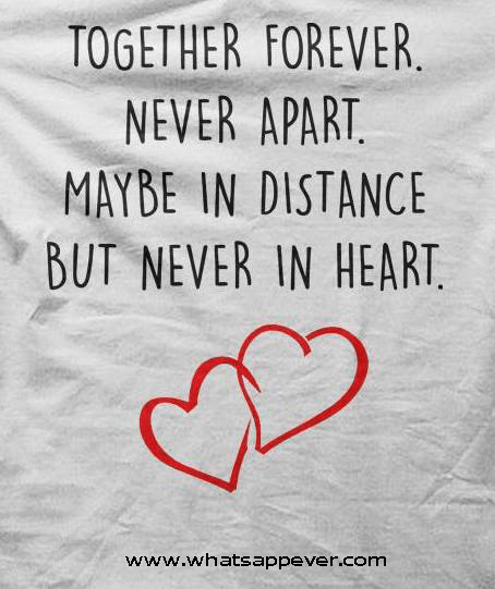 Best love Quotes together forever never apart may be in