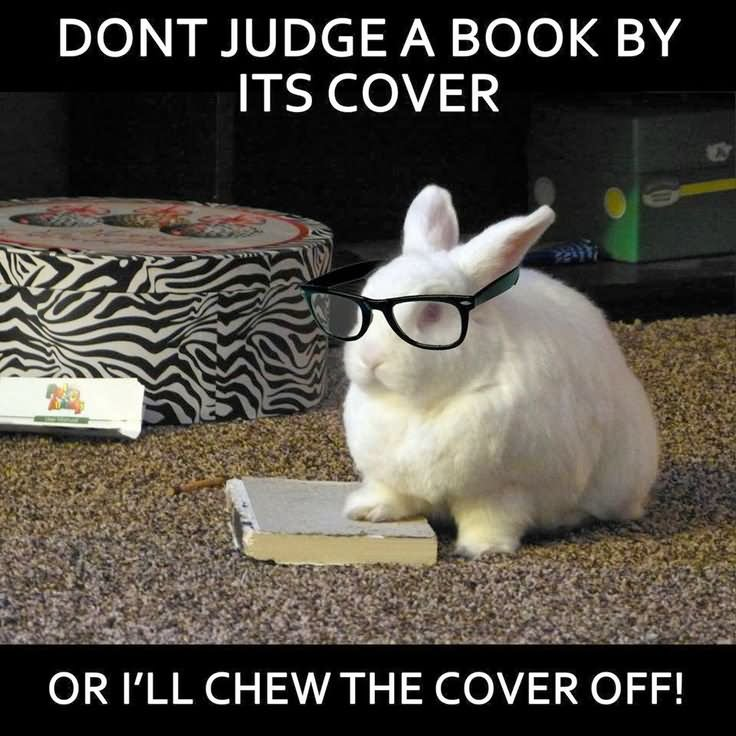 Don't judge a book by its cover or i'll chew the cover Rabbit Meme
