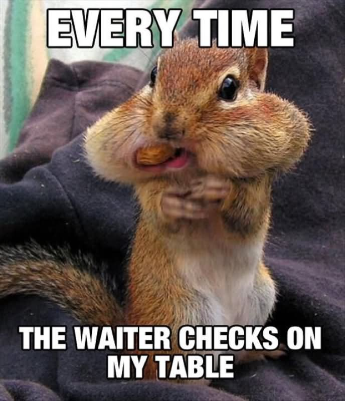 Every time the waiter checks on my table Pet Meme
