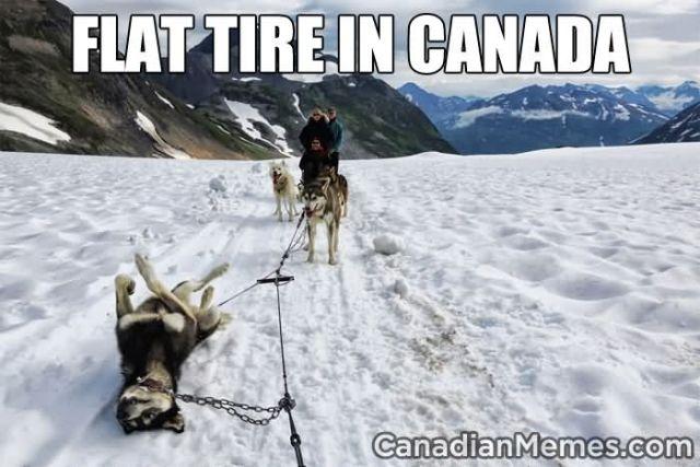 Flat tire in canada Sled Meme