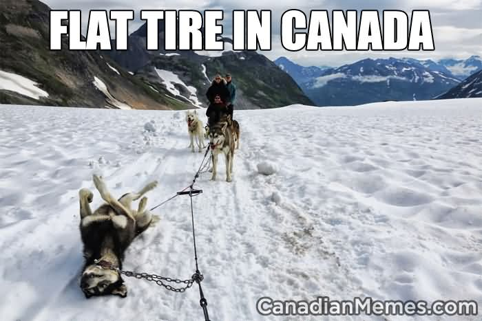 Flat tire in canada Sled Meme