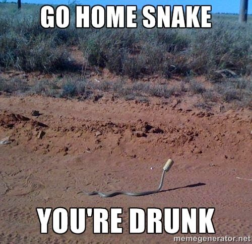 Go home snake you re drunk Pet Memes