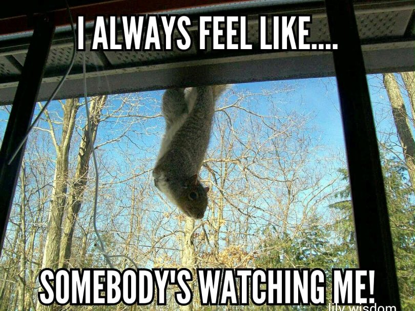 I always feel like somebody's watching me Squirrel Memes