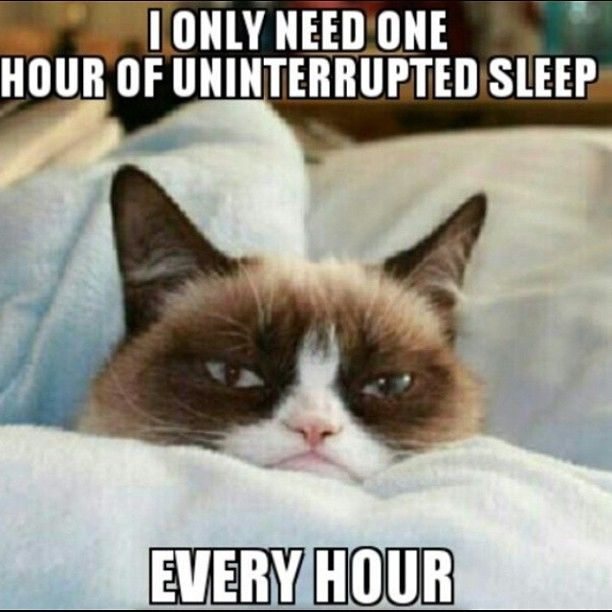 I only need one hour of uninterrupted sleep every hour Sleeping Meme