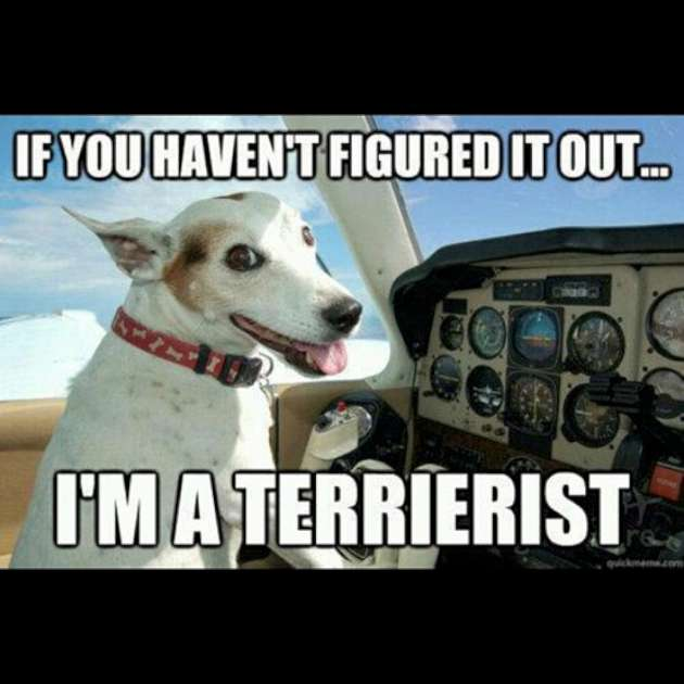 If you haven't figured it out I'm a terrierist Plane Meme