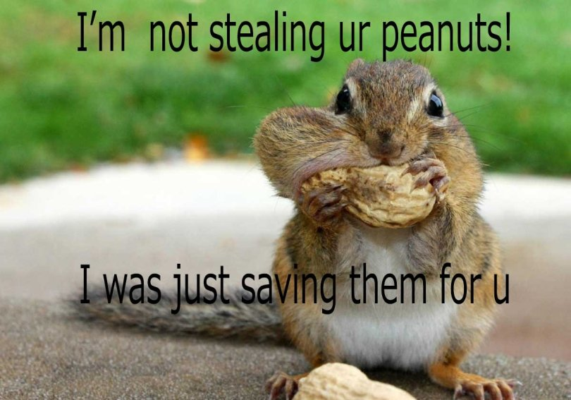 I'm not stealing ur peanuts i was just saving them for u Squirrel Meme