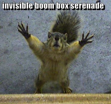 Invisible boom box serenade Squirrel Memes