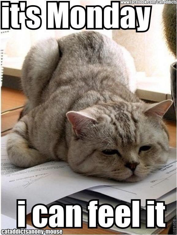 It's Monday i can feel it Pet Meme