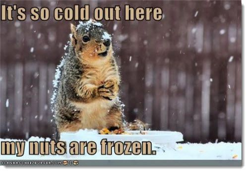It's so cold out here my nuts are frozen Squirrel Meme
