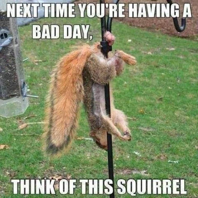 Next time you're having a bad day Squirrel Meme
