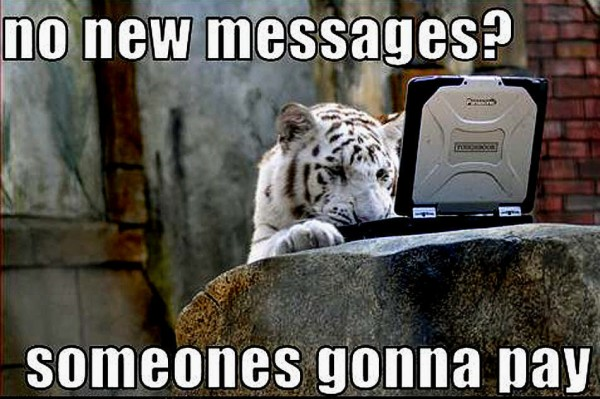 No new messages someone's gonna pay Tiger Meme