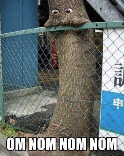Om nom nom nom Tree Memes