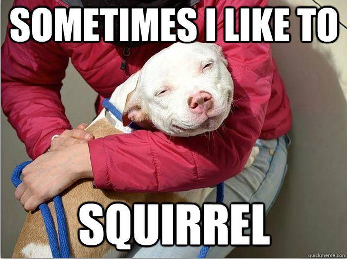Pet Meme Sometimes i like to squirrel