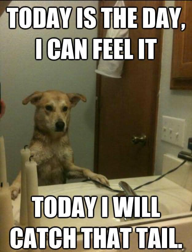Pet Meme today is the day i can feel it