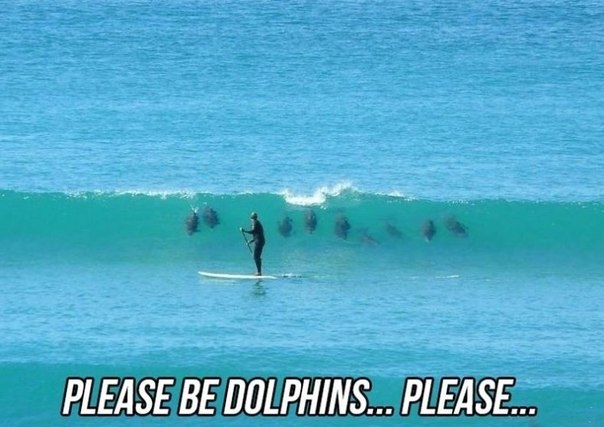Please be dolphins please Surfing Meme