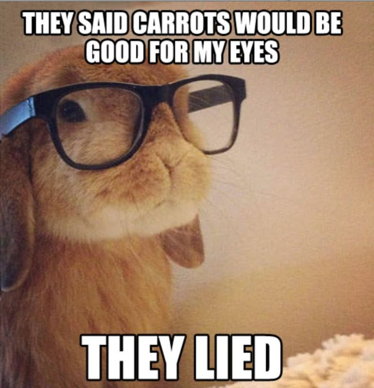 Rabbit Meme They said carrots would be good for my eyes they lied