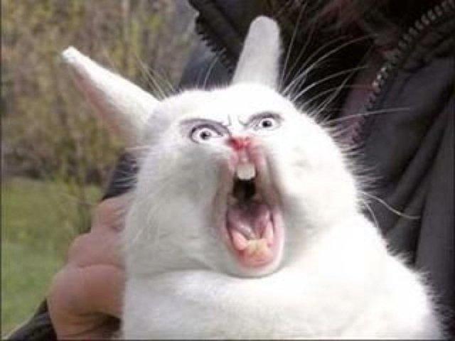 Rabbit Meme funny