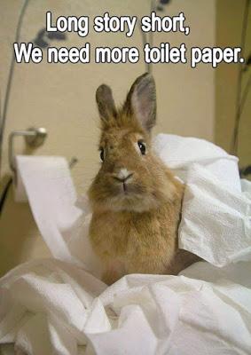 Rabbit Meme long story short we need more toilet paper