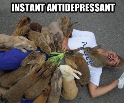 Rabbit Memes Instant antidepressant