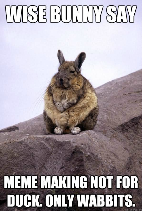 Rabbit Memes Wise bunny say meme making not for