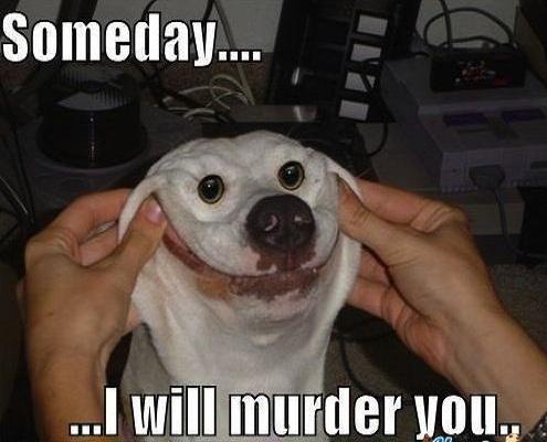 Someday i will murder you Pet Meme
