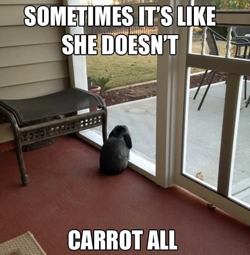 Sometimes it's like she doesn't carrot all Rabbit Meme