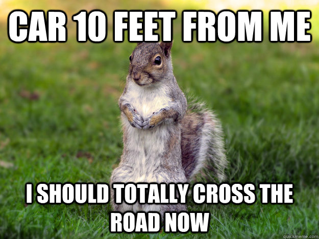 Squirrel Meme Car 10 feet from me i should totally cross the