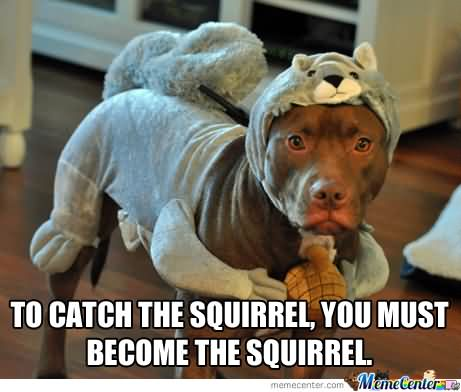 Squirrel Meme To catch the squirrel you must become the squirrrel