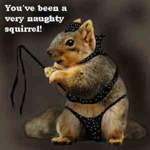 Squirrel Meme You've been a very naughty squirrel